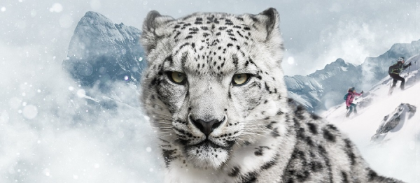 International Snow Leopard Day